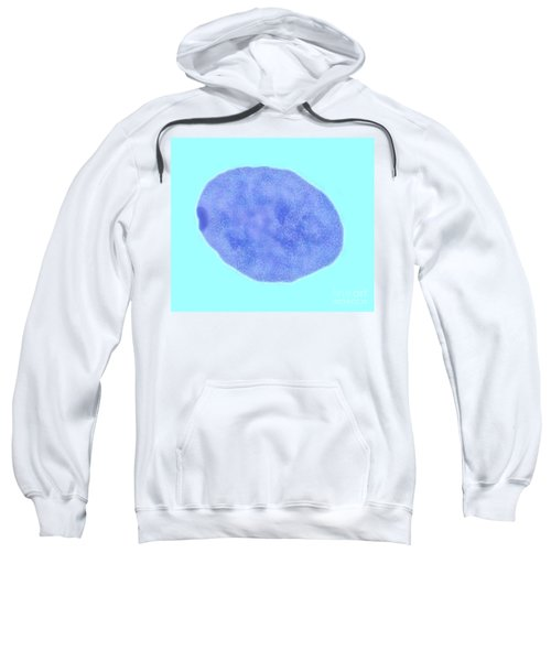 Female Cell Nucleus With Barr Body Sweatshirt