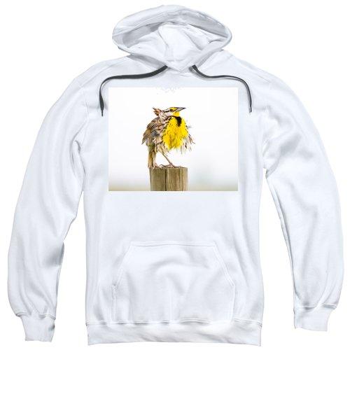 Flluffy Meadowlark Sweatshirt by Bill Swindaman