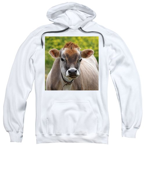 Funny Jersey Cow -square Sweatshirt