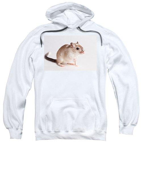 Gerbil Gerbillinae Sweatshirt
