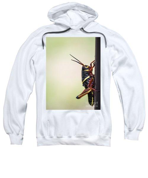 Giant Eastern Lubber Grasshopper Sweatshirt by Edward Fielding