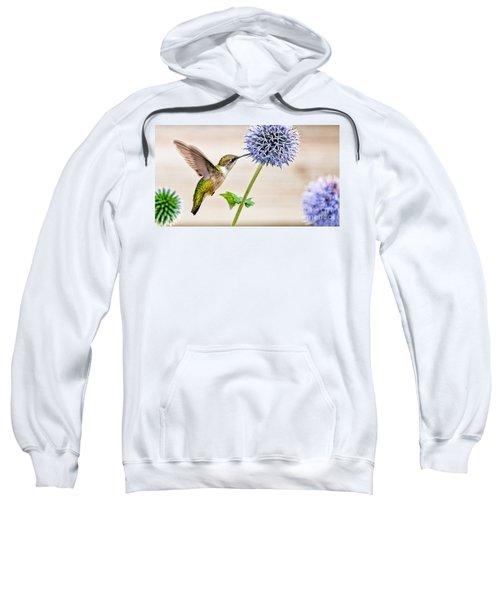 Globe Thistle Hummer Sweatshirt