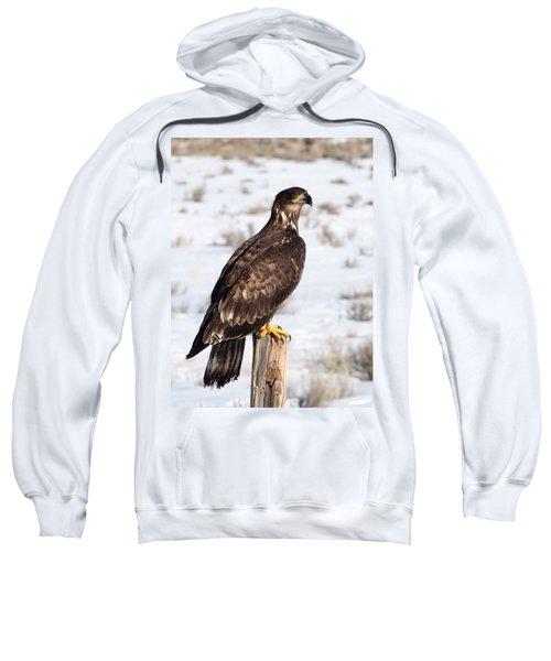 Golden Eagle On Fencepost Sweatshirt