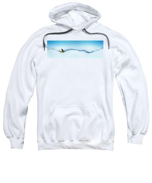 Goldfish Wearing Shark Fin Sweatshirt