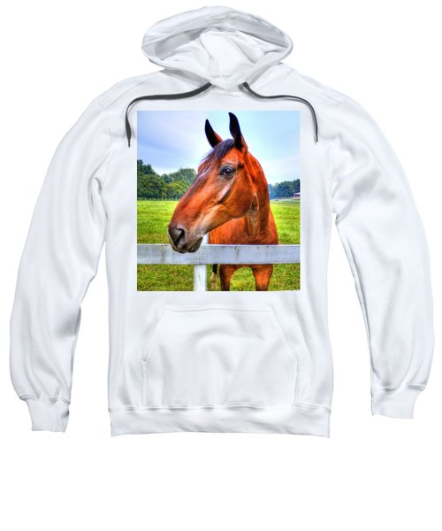 Horse Closeup Sweatshirt by Jonny D