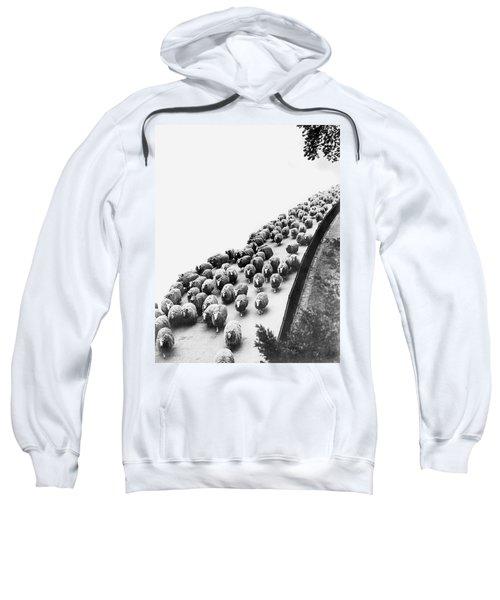 Hyde Park Sheep Flock Sweatshirt