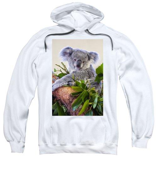 Koala On Top Of A Tree Sweatshirt by Chris Flees