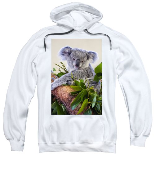Koala On Top Of A Tree Sweatshirt