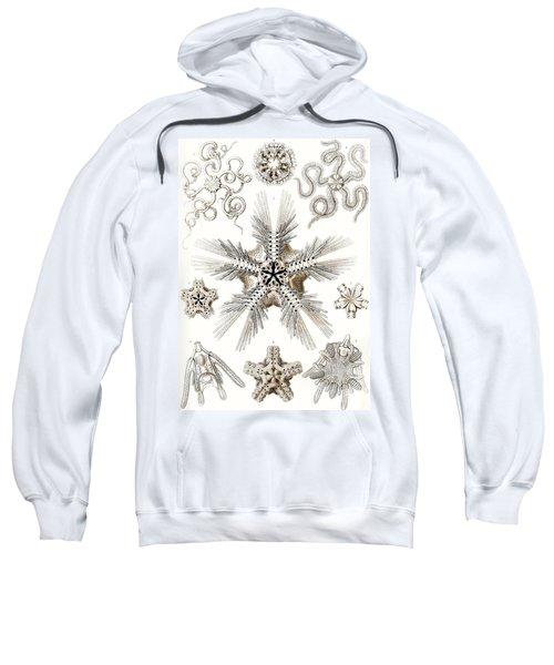Kunstformen Der Natur Sweatshirt