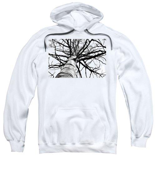Lone Birch Sweatshirt