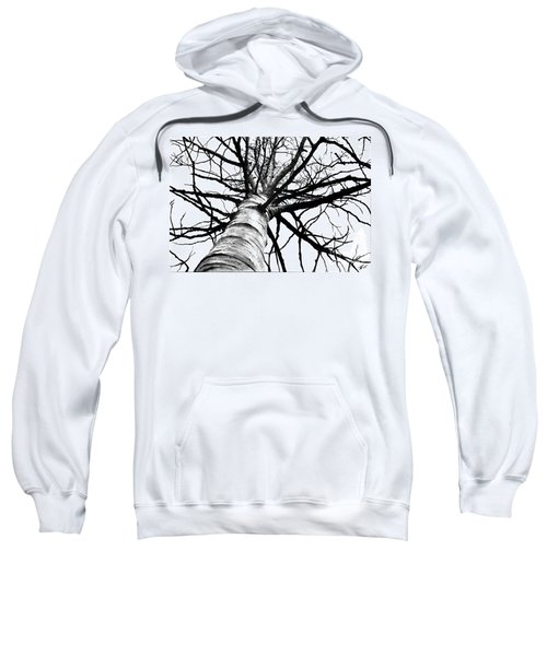 Lone Birch Sweatshirt