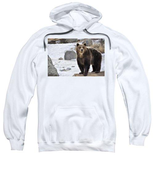 Montana Grizzly  Sweatshirt