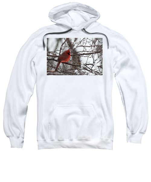 Northern Red Cardinal In Winter Sweatshirt