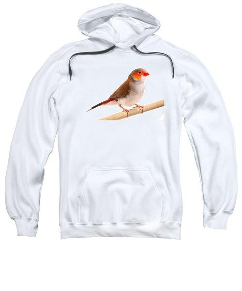 Orange-cheeked Waxbill Estrilda Melpoda Sweatshirt
