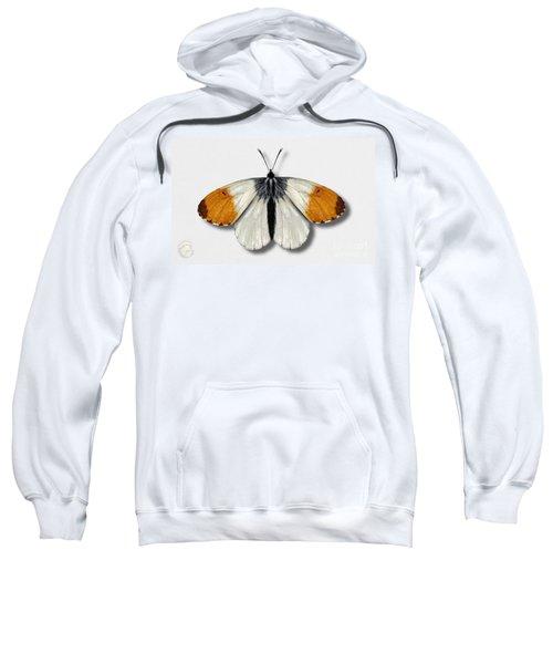Orange Tip Butterfly - Anthocharis Cardamines Naturalistic Painting - Nettersheim Eifel Sweatshirt