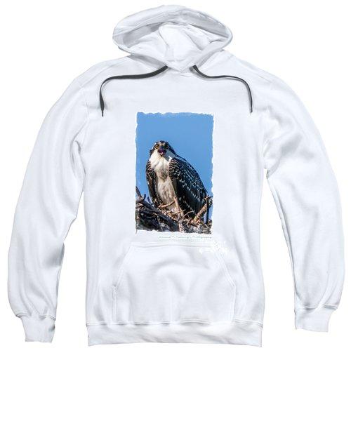 Osprey Surprise Party Card Sweatshirt