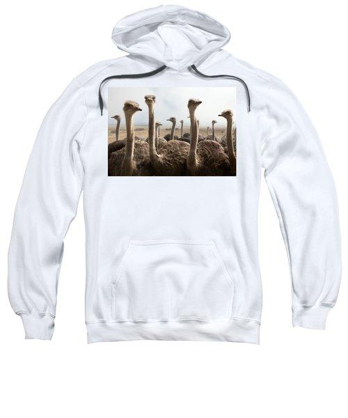 Ostrich Heads Sweatshirt by Johan Swanepoel