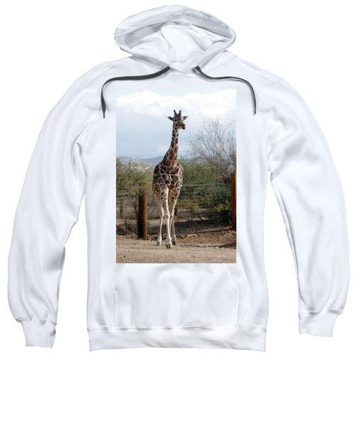 Out Of Africa  Giraffe 1 Sweatshirt