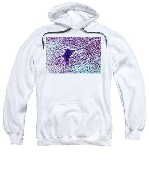 Ox Spinal Cord Sweatshirt