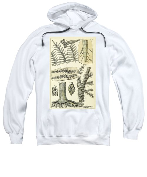 Paleozoic Flora, Calamites, Illustration Sweatshirt