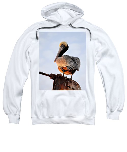 Pelican Looking Back Sweatshirt