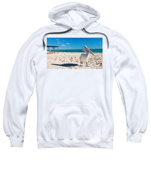 Pelican Under Blue Sky Sweatshirt