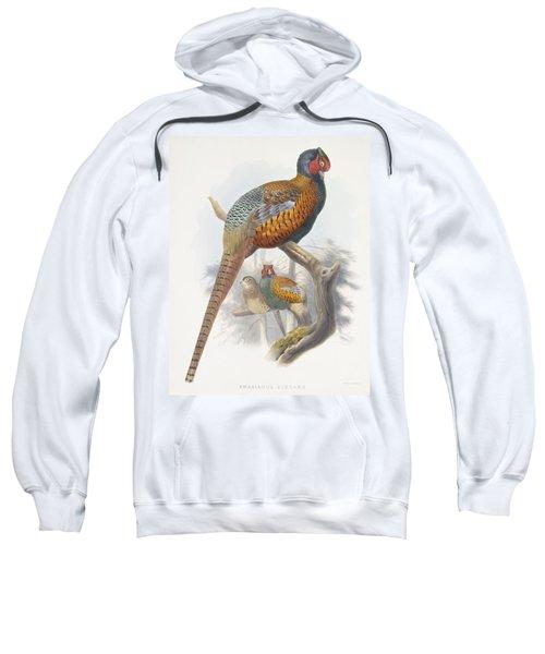 Phasianus Elegans Elegant Pheasant Sweatshirt by Daniel Girard Elliot