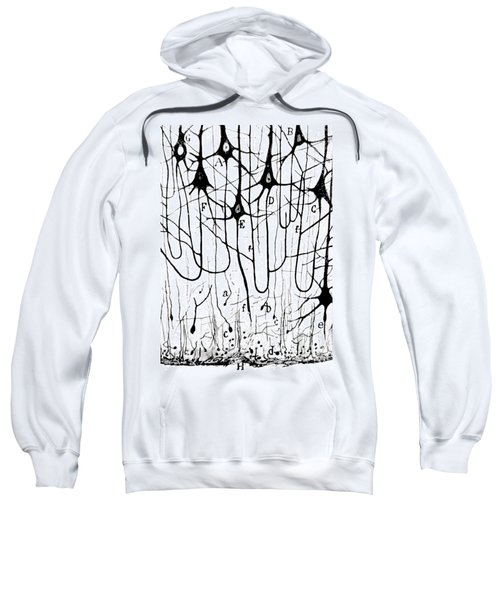 Pyramidal Cells Illustrated By Cajal Sweatshirt