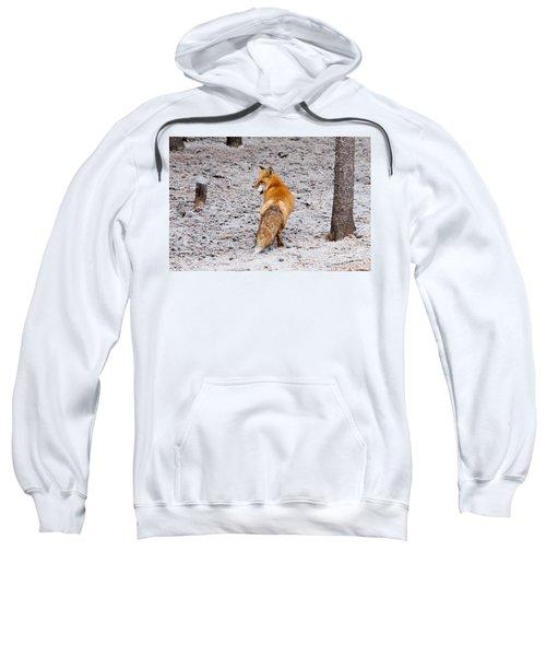 Red Fox Egg Thief Sweatshirt