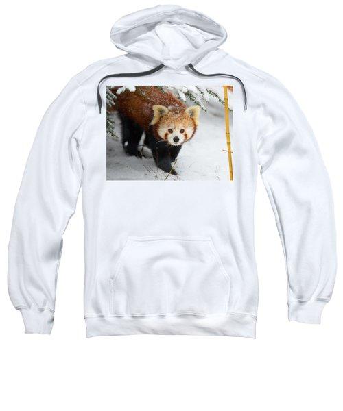 Red Panda In The Snow Sweatshirt