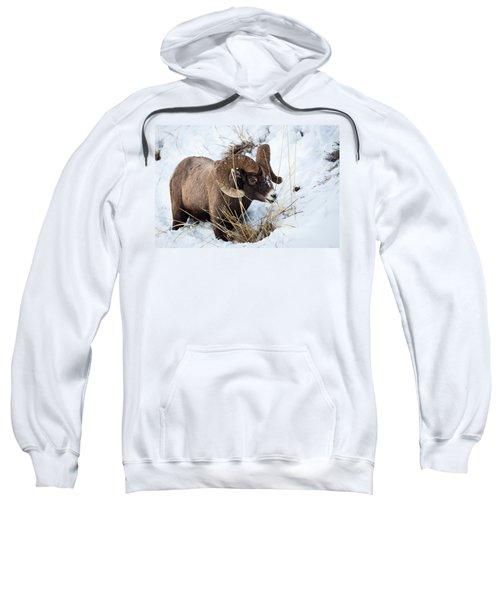 Rocky Mountain Bighorn Sheep Sweatshirt