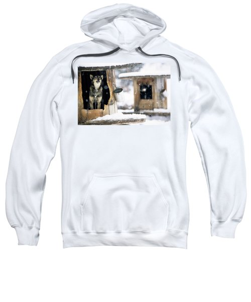 Sled Dogs Rest In Their Kennels Sweatshirt
