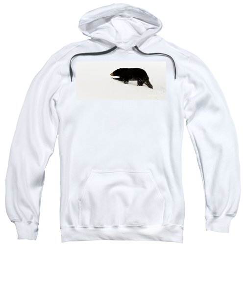 Snowy Bear Sweatshirt