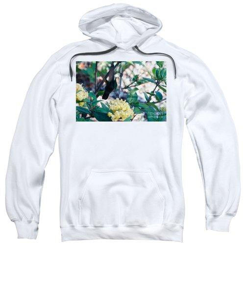 St. Lucian Hummingbird Sweatshirt