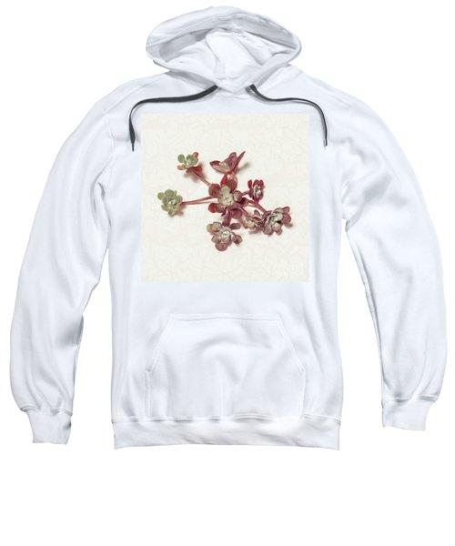 Succulent Plant 1 Sweatshirt
