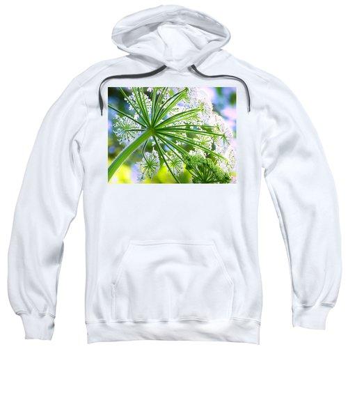 Summer Lace Sweatshirt