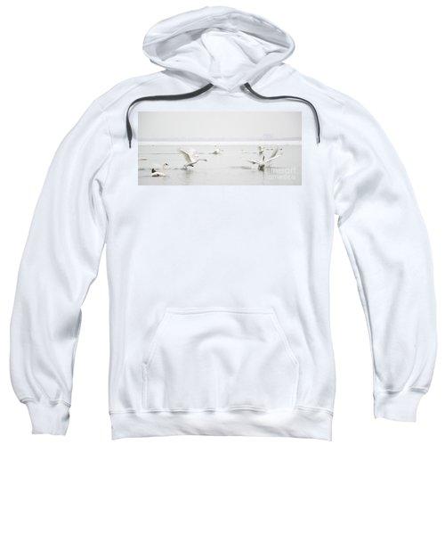 Swan Fight Sweatshirt