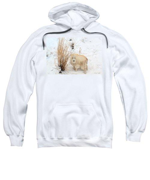 Sweet Little One Sweatshirt