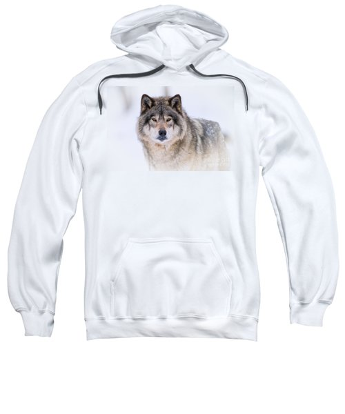 Timber Wolf Pictures 256 Sweatshirt