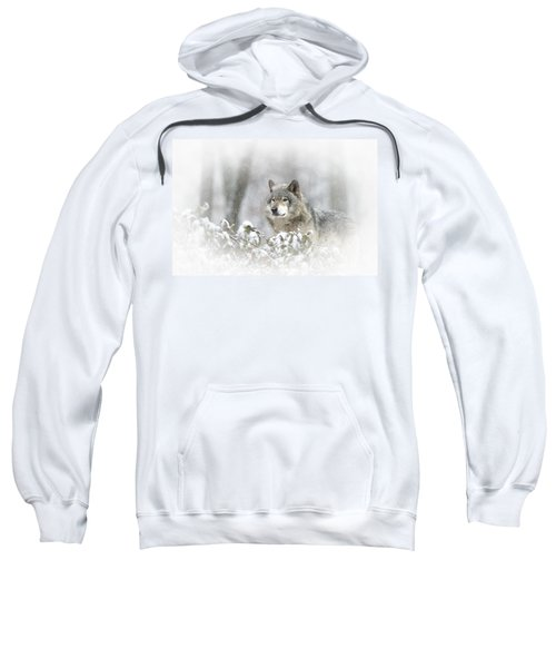 Timber Wolf Pictures 279 Sweatshirt