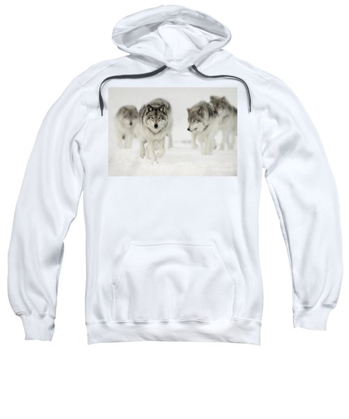 Timber Wolf Pictures 65 Sweatshirt
