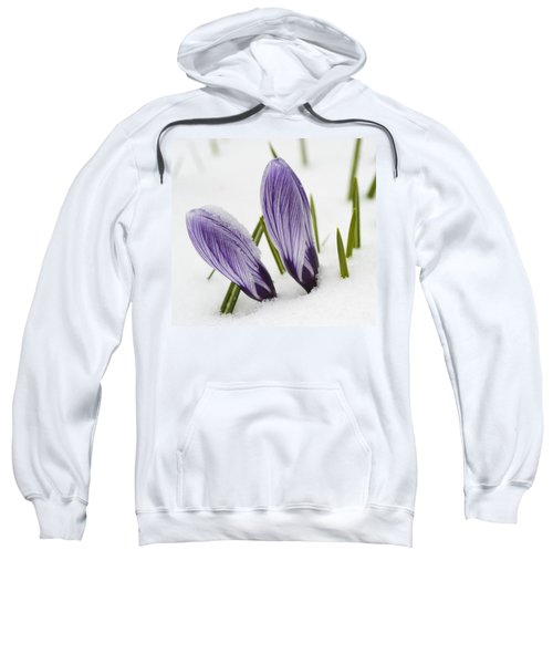 Two Purple Crocuses In Spring With Snow Sweatshirt