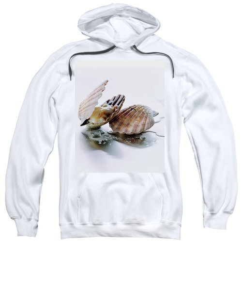 Two Scallops Sweatshirt