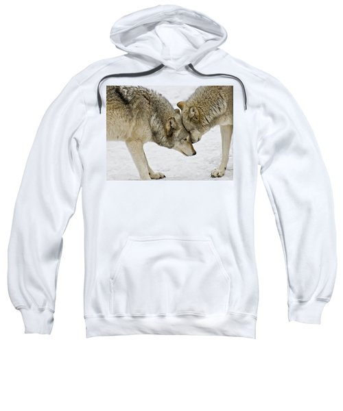 Two Wolves In  A Staredown Sweatshirt