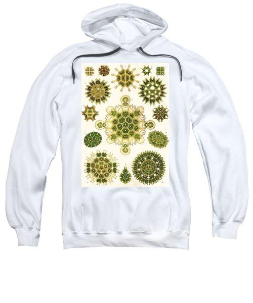 Varities Of Pediastrum From Kunstformen Der Natur Sweatshirt