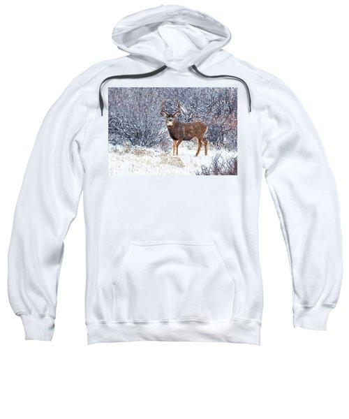 Winter Buck Sweatshirt