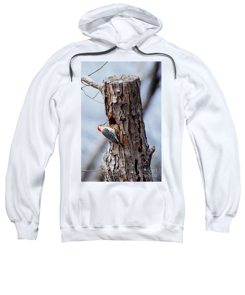 Woodpecker And Starling Fight For Nest Sweatshirt by Gregory G. Dimijian