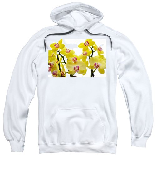 Yellow Beauties Sweatshirt