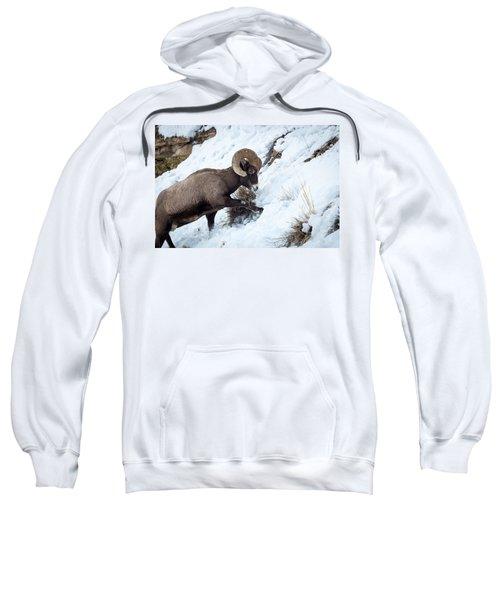 Yellowstone Bighorn Sweatshirt