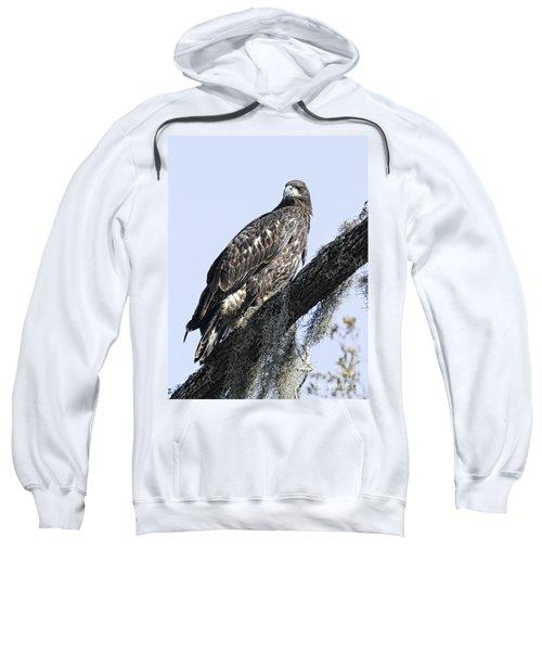 Young Eagle Pose Sweatshirt